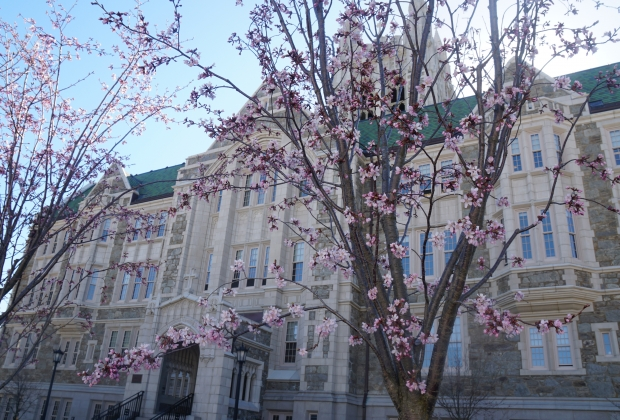 Gasson behind some lovely cherry blossoms